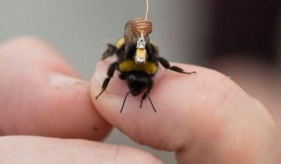 Albinele poarta rucsacuri mai nou