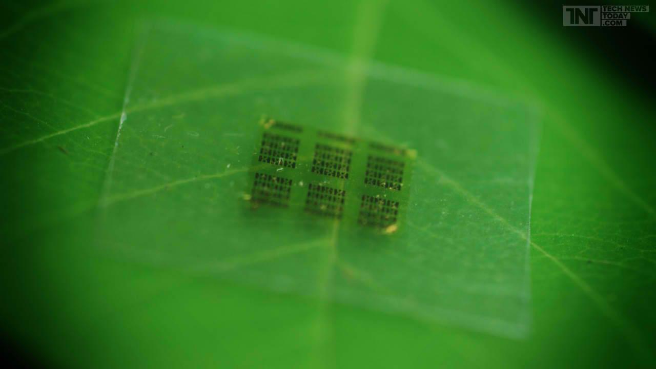 Cipurile de computer pot fi produse acum din lemn