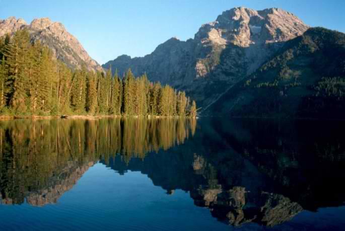 Niste parcuri nationale vor urmari prin GPS niste specii mai neobisnuite