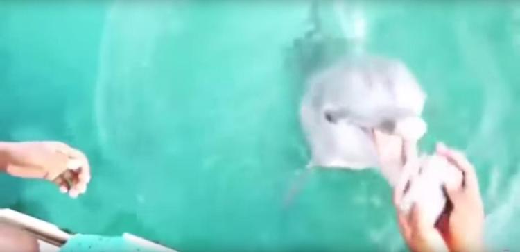 Un delfin salveaza iPhone-ul unei dansatoare de la inec