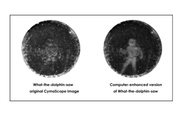 Cercetatorii au reusit sa vada ceea ce vad delfinii