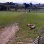 O drona este suspectata de moarte unui cal al politiei