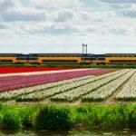 Olanda vrea ca intreg sistemul lor feroviar sa functioneze pe energie eoliana pana in 2018