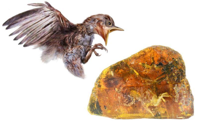O pasare de 99 de milioane de ani a fost descoperita de arheologi conservata in chihlimbar. Are niste caracteristici foarte neobisnuite