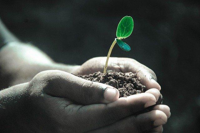 DARPA vrea sa creeze plante care functioneaza ca senzori care detecteaza atacuri biologice