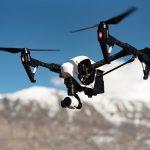 Politia din Olanda retrage programul cu vulturii care prind drone