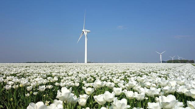Ce cantitate uriasa de energie electrica au generat turbinele eoliene in Scotia