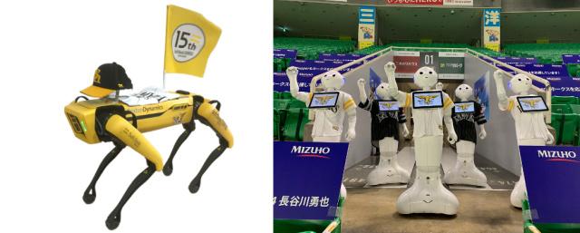 Pentru ce echipa japoneza de baseball robotii Spot si Pepper vor fi spectatorii