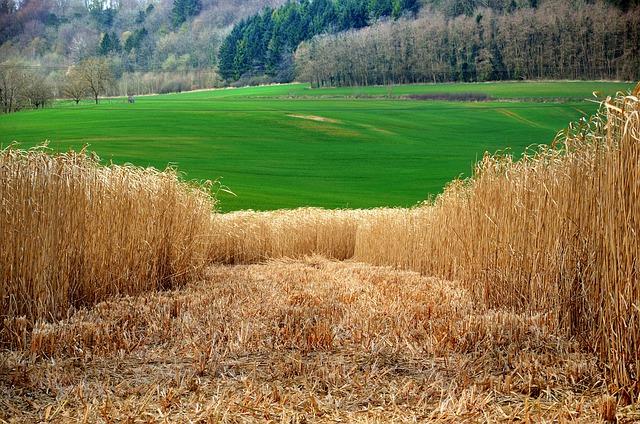 Efectele faptului ca biomasa Pamantului a fost depasita de materialele create de om